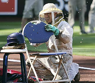 The Padres call in a beekeeper to disperse the swarm that causes nearly an hour delay.  (AP)